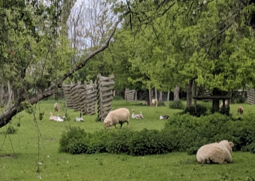 The farm is a working Tudor farm and has lots of activities for children