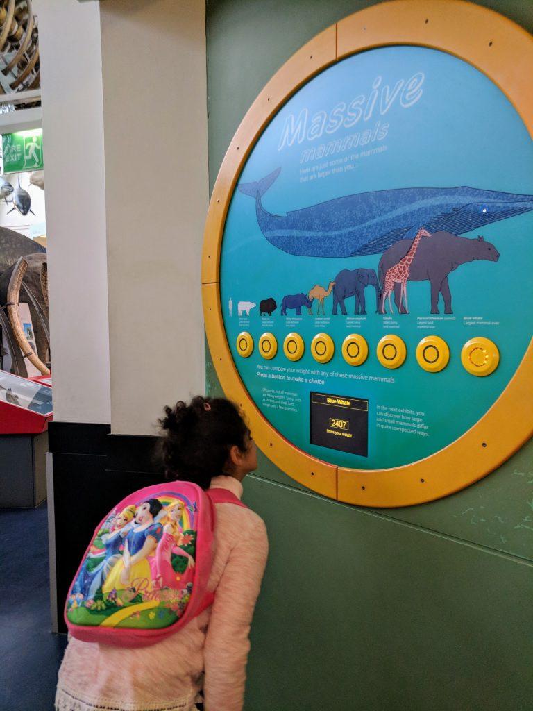 Natural History museum mammals gallery