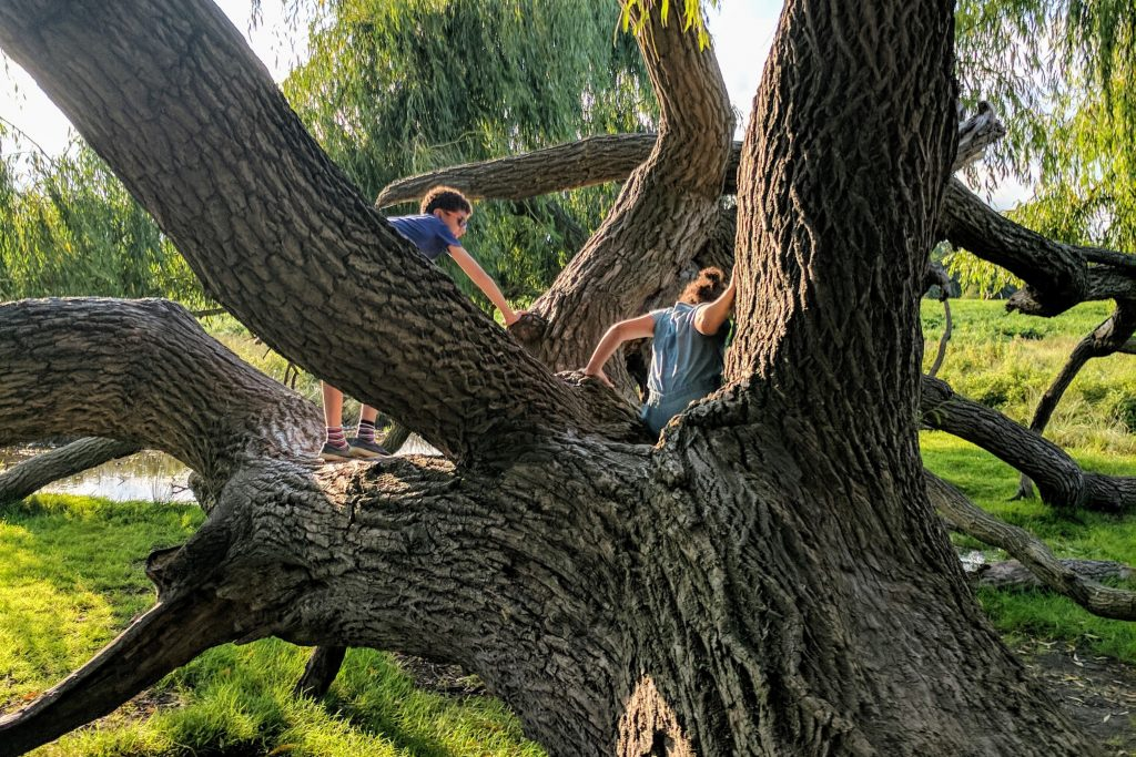 Kids climbing trees at Bushy Park