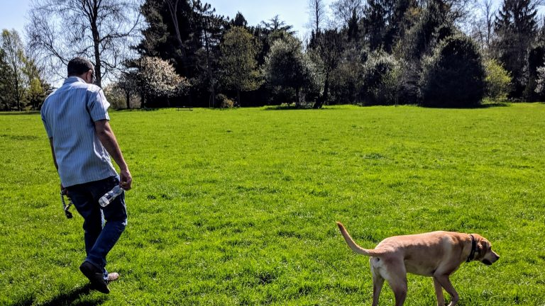 Dog-Friendly Parks Near London