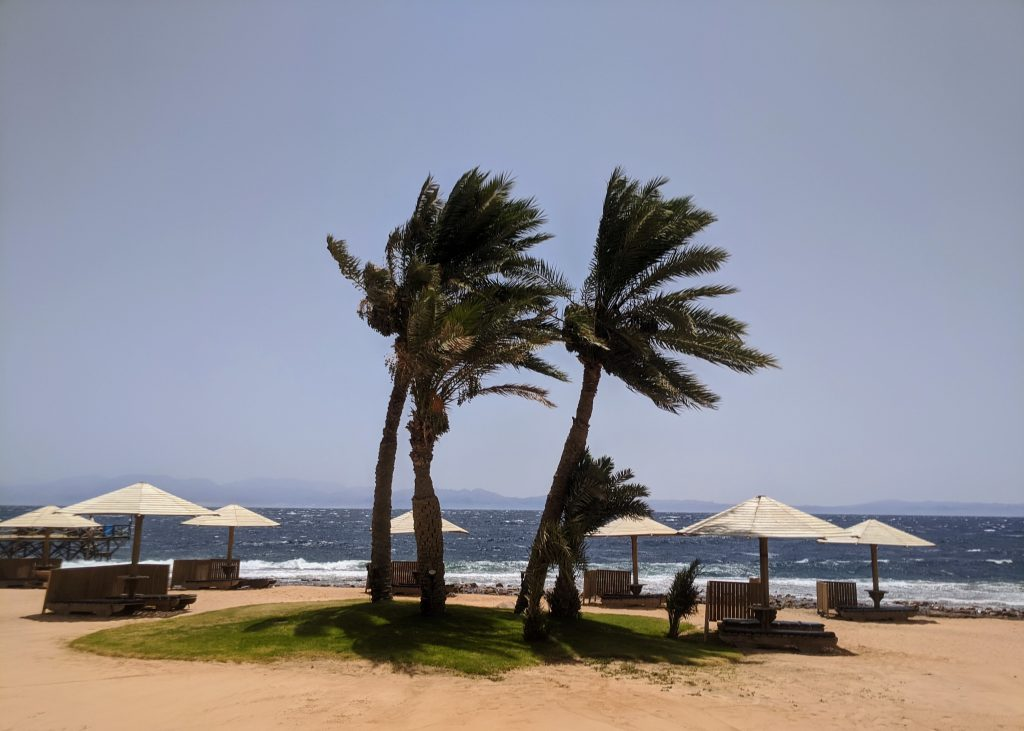 Palm trees and umbrellas on a beach